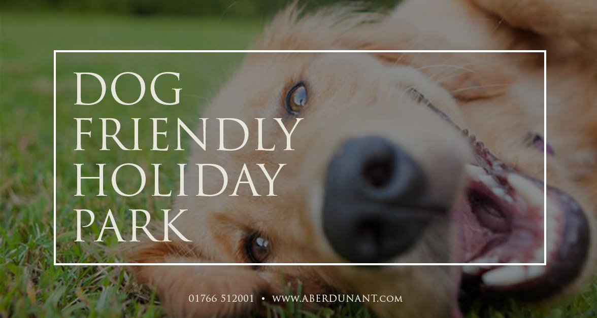 Dog Friendly Holiday Park In North Wales
